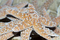 Free Sea Stars Royalty Free Stock Images - 18695099