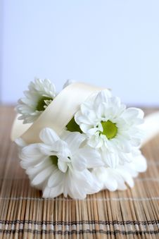 Free White Daisies Stock Photo - 18690080
