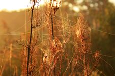 Free Morning Dew On Spider Webs Stock Images - 18690164