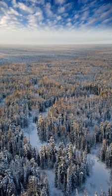 Free Top View Forest River In A Frosty Day Royalty Free Stock Photos - 18690648