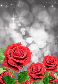 Free Pink Rose Stock Image - 18691451