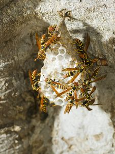 Free Hornet S Nest In A Tree Stock Image - 18691871