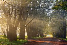 Free Sun Rays In Spring Forest Stock Photography - 18691922
