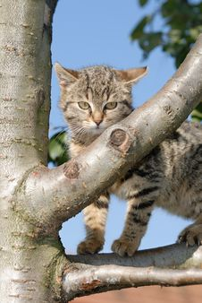 Free Kitty On A Tree Stock Photo - 18692560