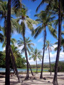 Free Hawaiian Palm Trees Stock Photo - 18693890