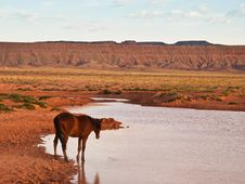Free Wild Horse Stock Photo - 18694840
