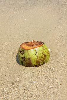 Unused Coconut Royalty Free Stock Images