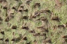 Free Rice Fields After Harvest Stock Photo - 18697930
