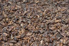 Free Gunpowder Tea Background Stock Images - 18699564