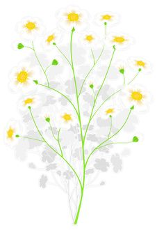 Free Green Branch With Yellow Flowers Royalty Free Stock Photo - 18699705