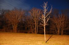 Free Night Landscape Royalty Free Stock Image - 1870496