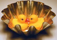 Free Ducks Kissing 02 Royalty Free Stock Image - 1873986