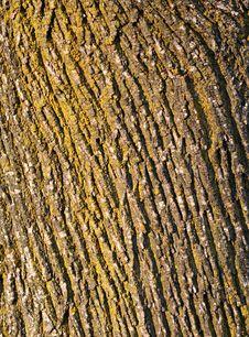 Free Tree Bark Background Stock Photography - 1874282