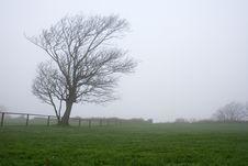 Free Fog And Tree Stock Photo - 1876740