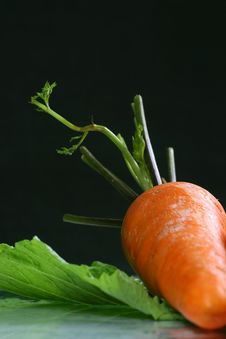 Free Fresh Carrot On The Colza Background Stock Photography - 1876862