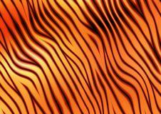 Free Zebras Stock Image - 1879171