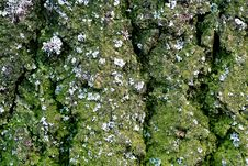 Free Bark And Moss With Lichen Royalty Free Stock Photography - 1879657