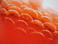 Free Red Bubbles Royalty Free Stock Image - 18700086