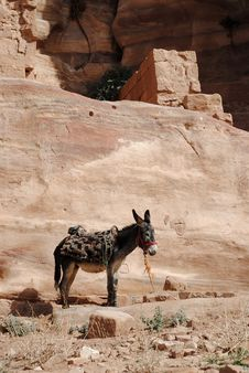 Donkey In Petra Stock Images