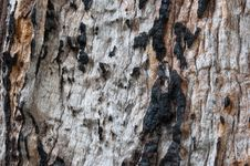 Free Knotty Burned Old Wood Stock Images - 18705144