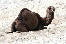 Free Camel Stock Photo - 18710600