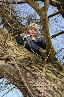 Free Boy Sitting On Tree Royalty Free Stock Image - 18713186