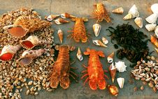 Free Lobsters And Shells Stock Photo - 18713480