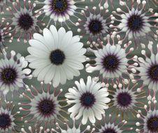 Free Flowers Royalty Free Stock Photos - 18715388