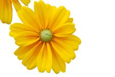 Free Sunflower Frame Background Stock Photo - 18716920