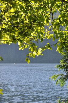 Free Green Leaf Near Lake Royalty Free Stock Photos - 18716958