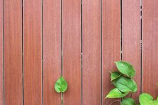 Free Green Leaves With Wooden Wall Stock Photo - 18717580
