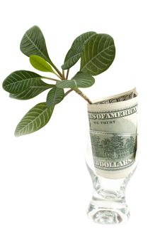 Free Dollar In A Glass Stock Photography - 18719272