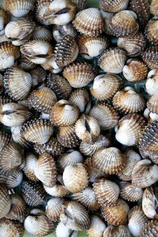 Free Cockle Shell Background Royalty Free Stock Image - 18719506