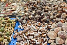 Free Selection Of Shells At Seafood Market Stock Photography - 18719972