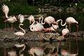 Free Flamingo Stock Images - 18729714