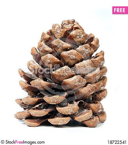 Free Pinecone Stock Image - 18722541