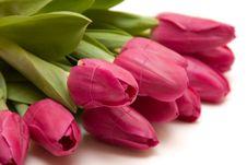 Free Spring Tulips Stock Photo - 18720740
