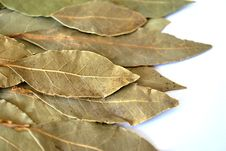 Free Bay Leaf Royalty Free Stock Photos - 18721258