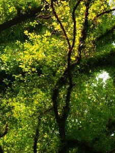 Free Green Trees Royalty Free Stock Photo - 18722295