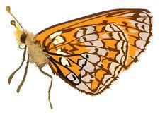 Free Singleorange Butterfly Illustration Royalty Free Stock Image - 18722956