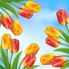 Free Spring Background Royalty Free Stock Photography - 18723197