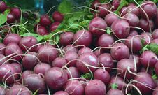 Garden Fresh Vegeatables Radishes Stock Images