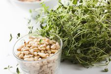 Free Pine Nuts And Plant Of Thyme Stock Images - 18725334