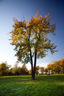 Free Colorful Tree With Green Grass And Blue Sky Royalty Free Stock Photos - 18725458
