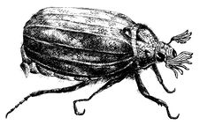 Free Detailed Bug Pencil Drawing Style Stock Photography - 18726332