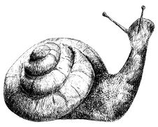 Free Detailed Snail Pencil Drawing Style Royalty Free Stock Images - 18726339