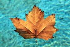 Leaf Floating On Water Royalty Free Stock Images