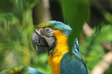 Free Parrot Stock Image - 18729451