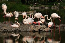 Free Flamingo Stock Images - 18729714