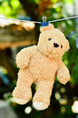 Free Wet Teddy On A Clothesline Royalty Free Stock Images - 18730589